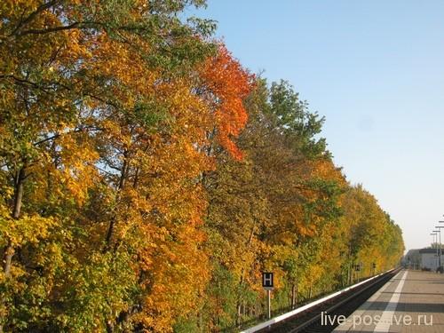 берлинская осень, середина ноября
