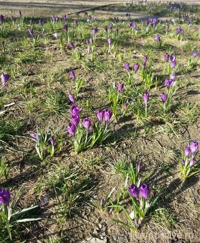 февральские цветочки