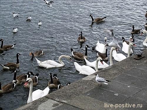 Птички ждут еду