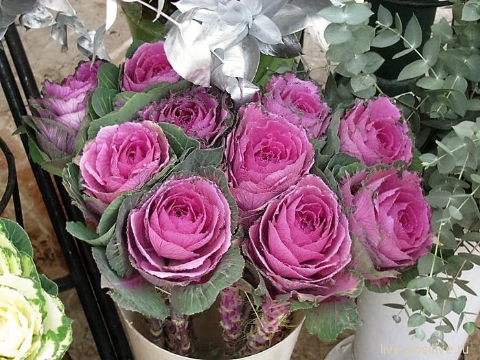Другие загадочные цветы