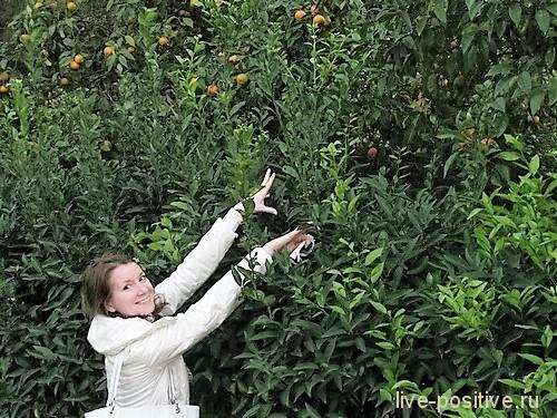 Охота за мандаринами