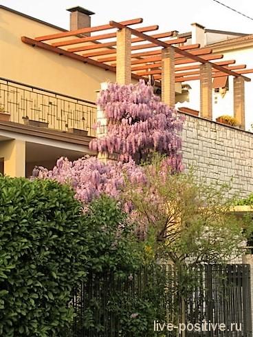 Красота во дворах