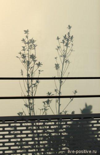 цветочек на соседском балконе